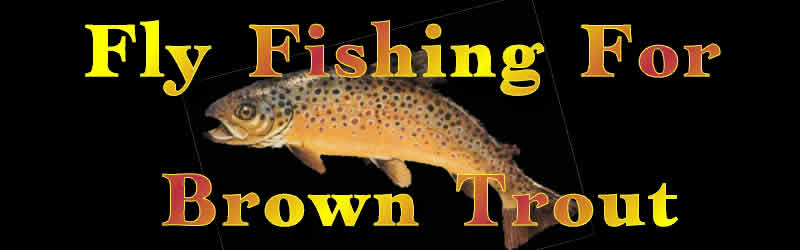 fly fishing brown trout